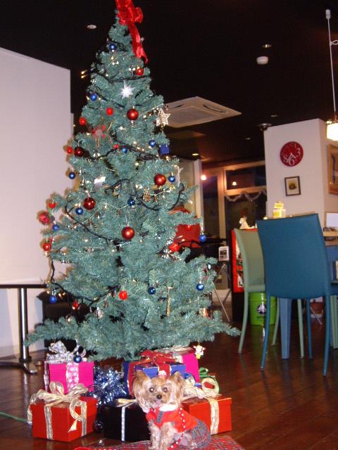 クリスマスツリーとノン