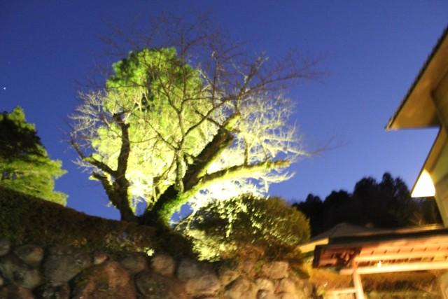 ライトアップされている庭の木々