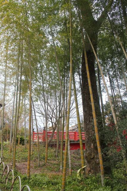 竹林の中の赤い橋