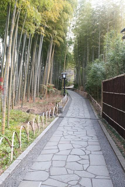 桂川に沿う遊歩道の左右に竹林