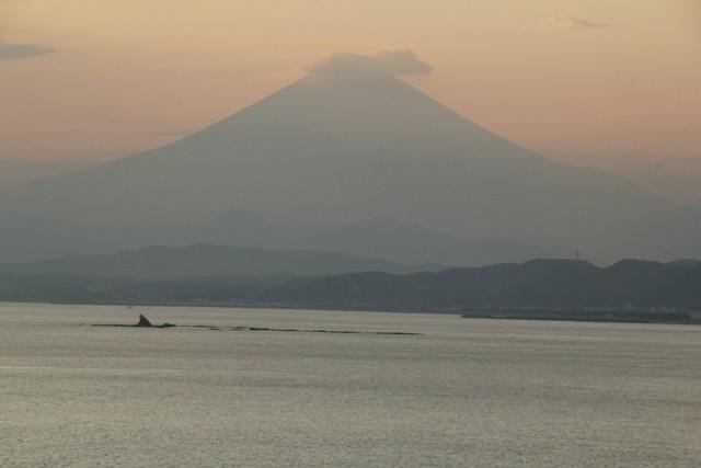 富士山のシルエットが綺麗ね