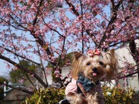 河津桜と一緒に