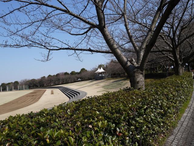 公園内の桜はまだまだね