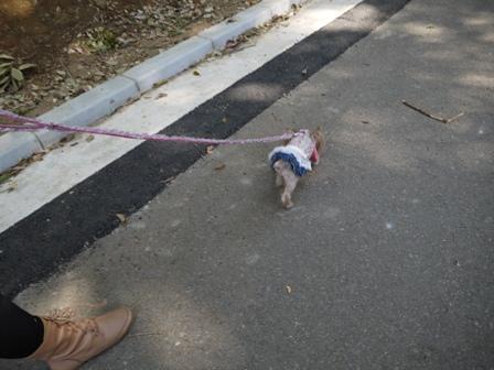 ナオちゃんと散歩