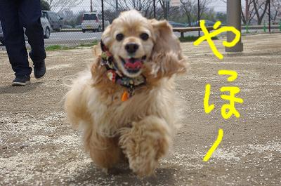 s-高坂SAのコピー