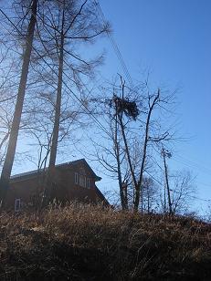 別荘とクマ棚