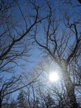 冬の空と樹