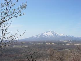 ヤナギと浅間山