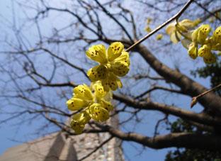 セルリアンの花2