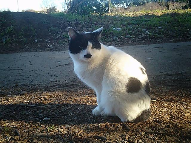 畑猫 黒ブチ