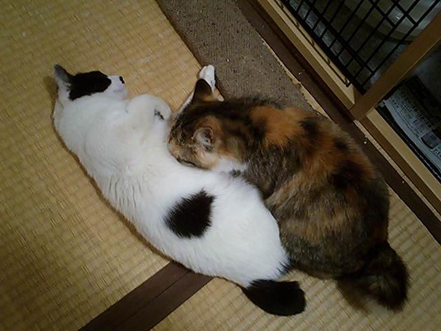リリー♀&フーチャン♀