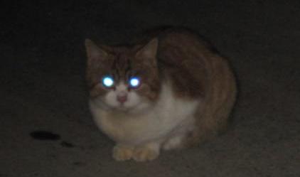暗闇のモン