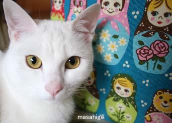 IMG_6645じろっぴー