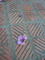 ハノイ花盛りバンラン1