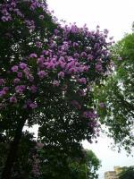ハノイ花盛りバンラン3