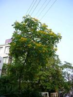 ハノイ花盛りー1
