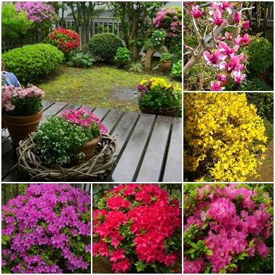 09年春のお花達