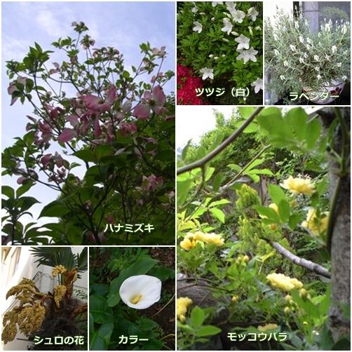 4月後半の花
