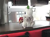 八幡平~田沢湖行きのバス