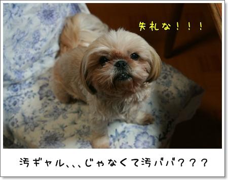 2008_0930_190122AA.jpg