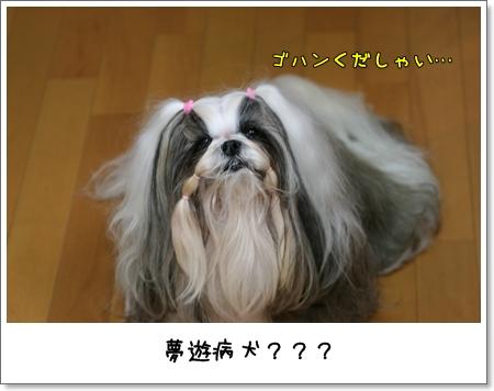 2008_1008_062452AA.jpg