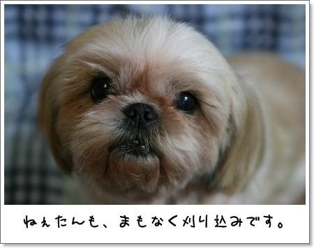 2008_1008_191619AA.jpg
