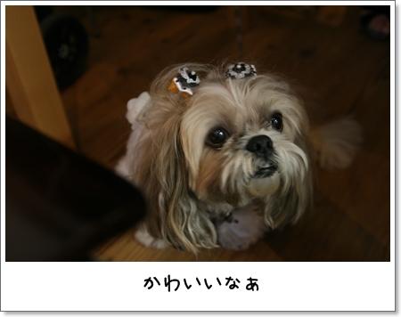 2008_1012_130446AB.jpg