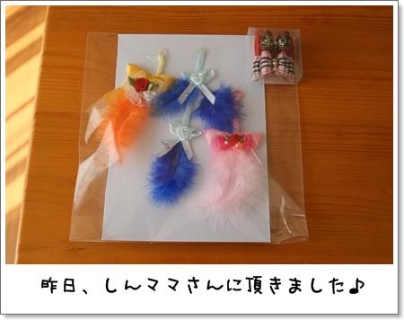 2008_1013_104422AA.jpg