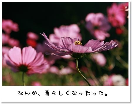 2008_1013_150001.jpg