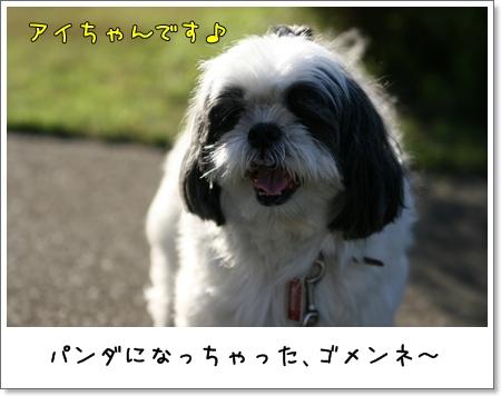 2008_1013_150051AA.jpg