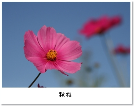 2008_1013_151218AA.jpg