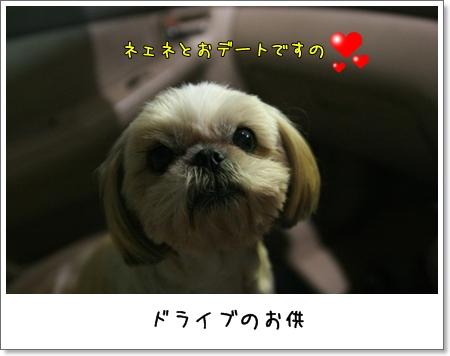 2008_1022_184324AA.jpg