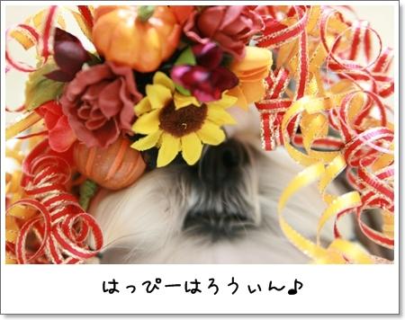 2008_1025_173107AA.jpg