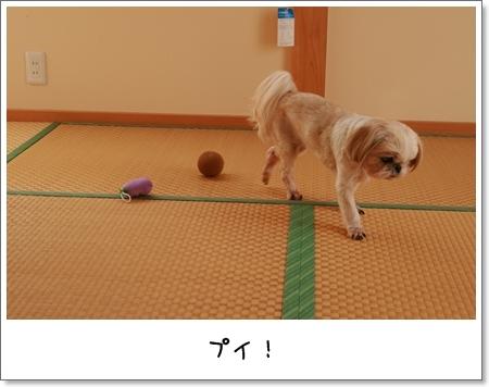 2008_1101_100932AA.jpg