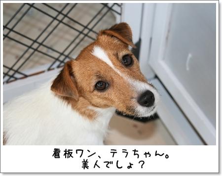 2008_1102_141446AA.jpg