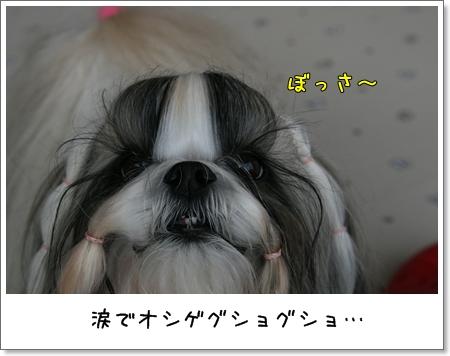 2008_1102_144842AA.jpg
