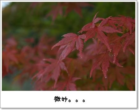 2008_1103_133826AA.jpg