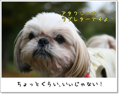 2008_1103_134801AA.jpg