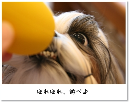 2008_1105_073427AA.jpg