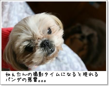 2008_1105_183515AA.jpg