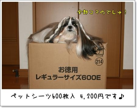 2008_1108_155851AA.jpg