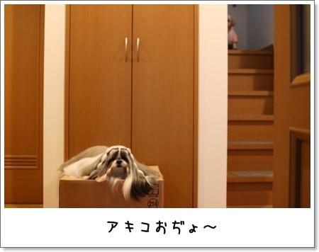 2008_1108_160022AA.jpg