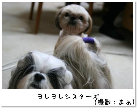 2008_1111_190400AB.jpg