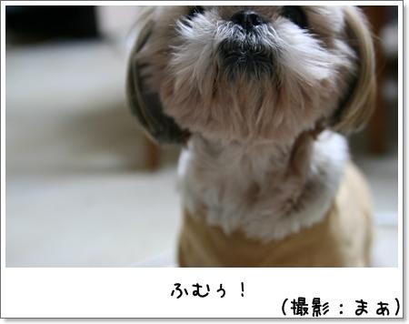 2008_1111_190424AB.jpg