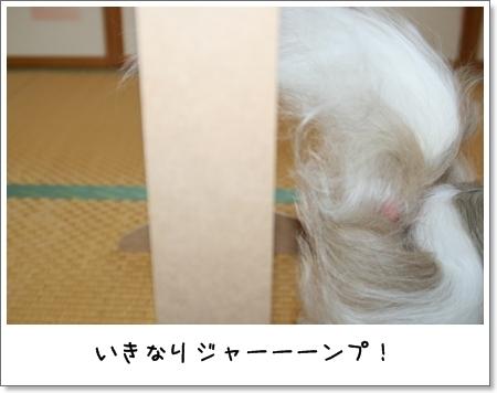 2008_1117_073253AA.jpg
