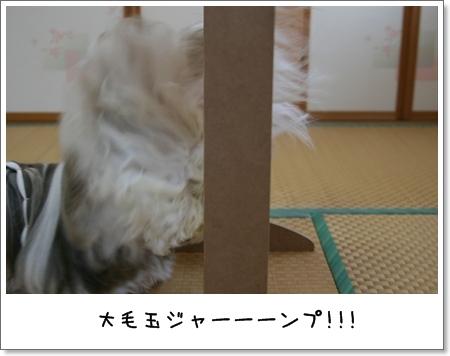 2008_1117_073351AA.jpg