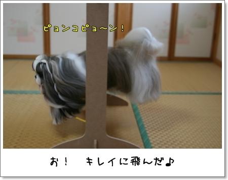2008_1117_073446AA.jpg