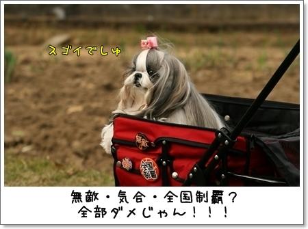 2008_1123_130221AA.jpg