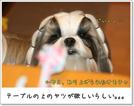 2008_1124_152755AA.jpg
