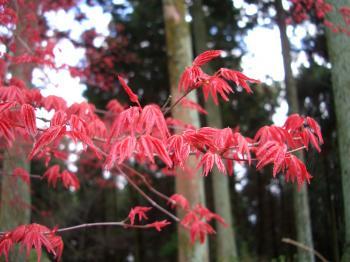 紅葉も真っ赤で綺麗でした